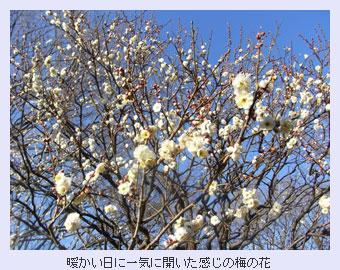 tokoton-13a.jpg