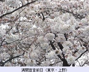 tokoton-15b_sakura2.jpg