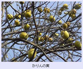 tokoton-23a.jpg